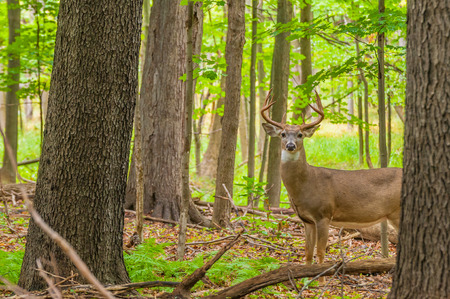 Best Rifle Calibers for Big Game Hunting